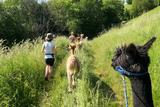 Alpaka-Wanderung, Fotograf: Hummel