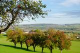 Landschaft im Naturpark Südeifel